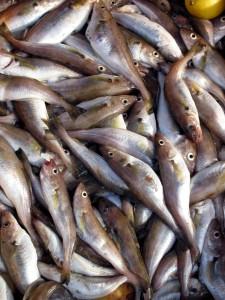 Ryby s píčí příchutí